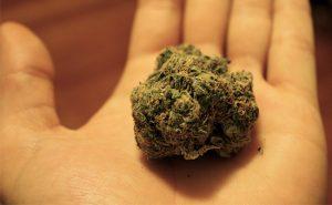 Is Marijuana A Global Addiction?