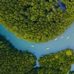 Kayaking in Mangrove_32